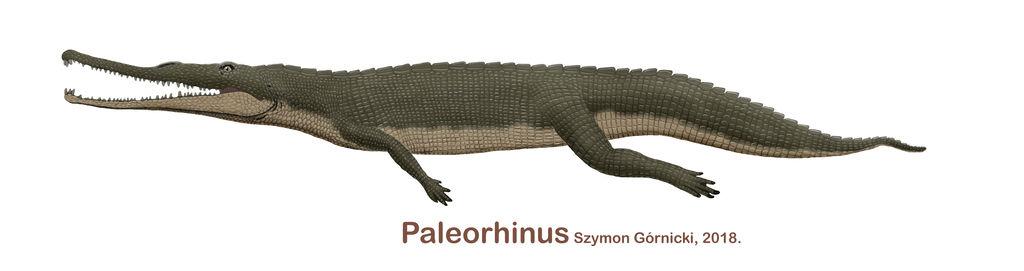 paleorhinus_2018_by_szymoonio_dcimxw4-fullview