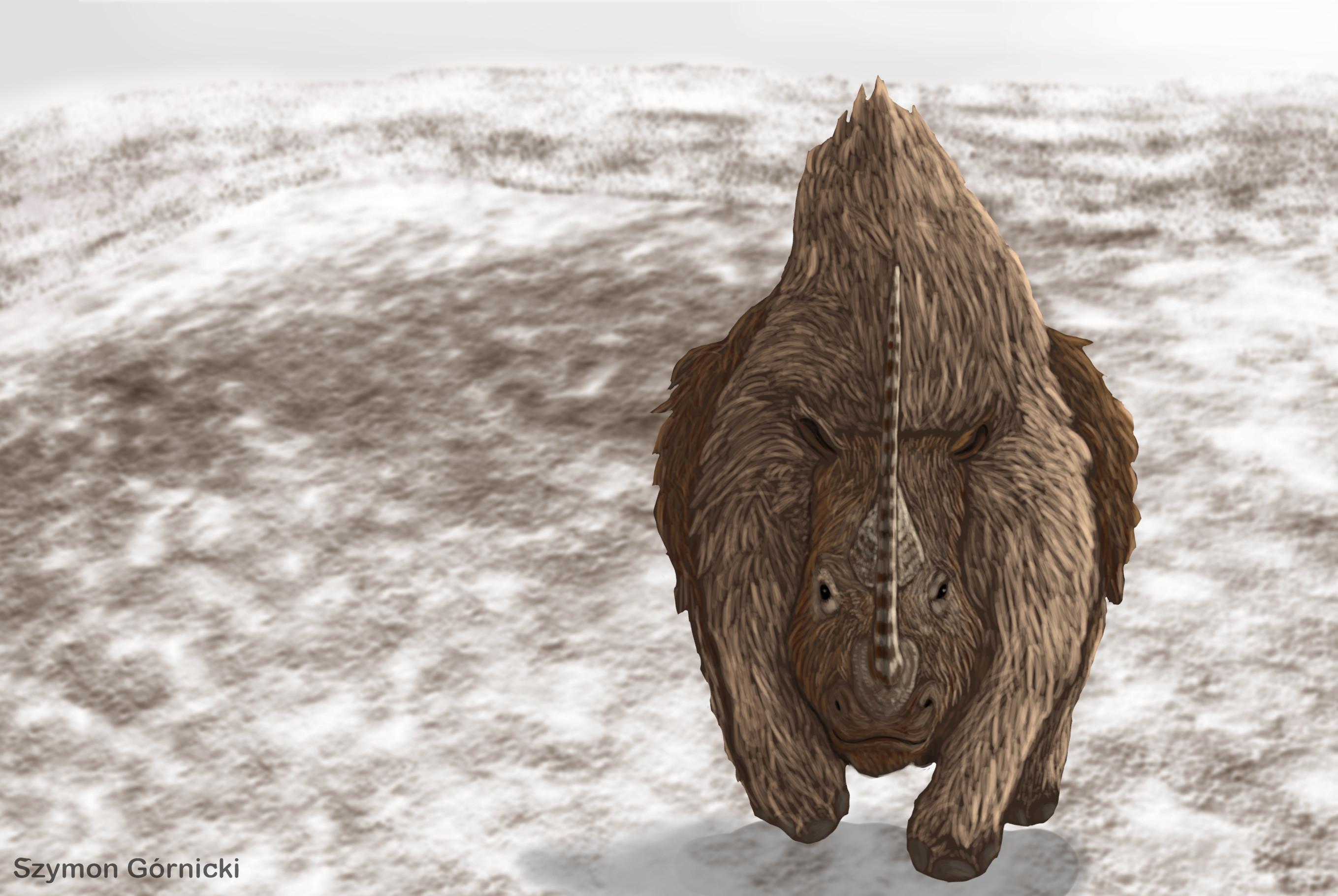 Charging woolly rhinoceros.