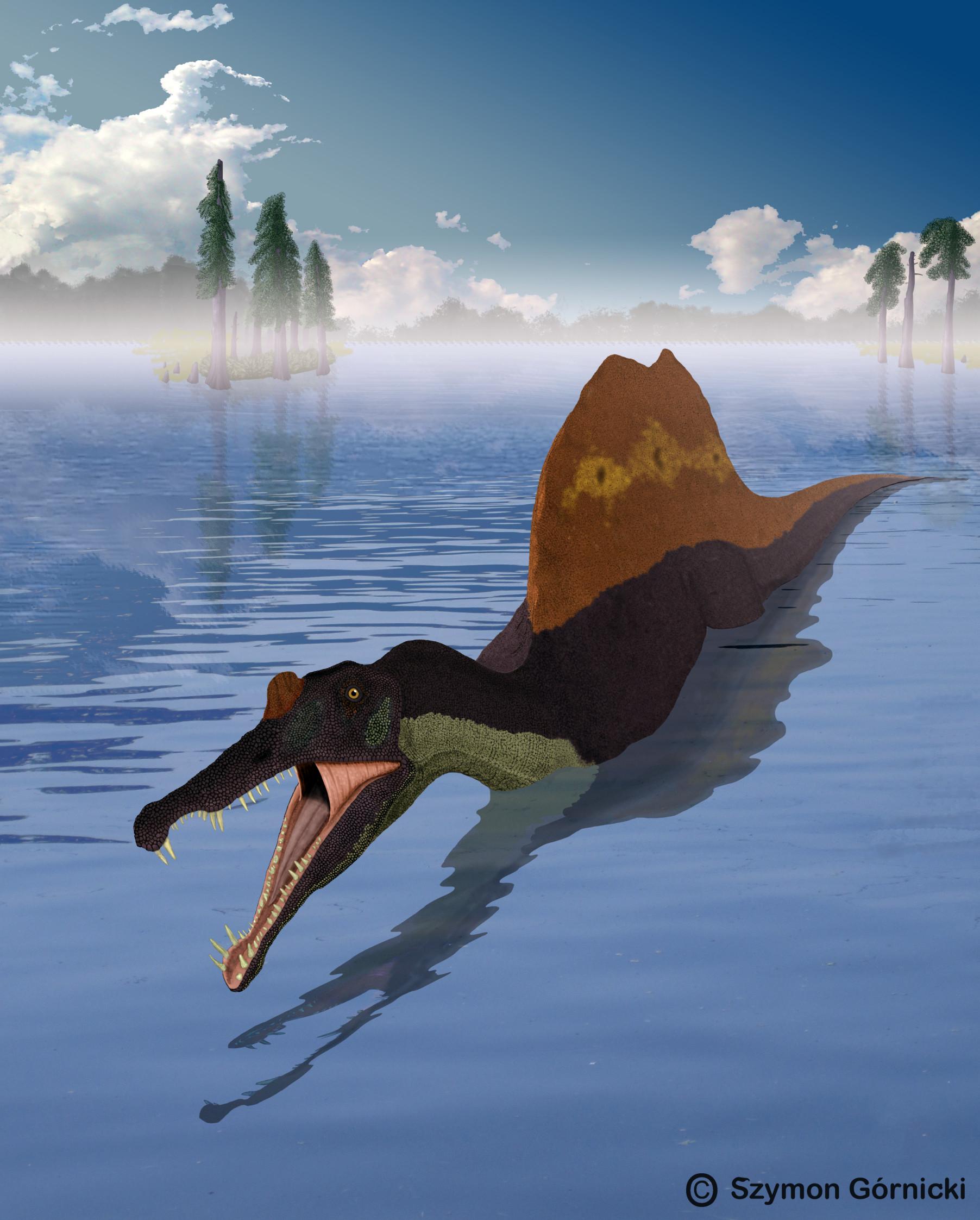 Spinosaurus in deeper water.