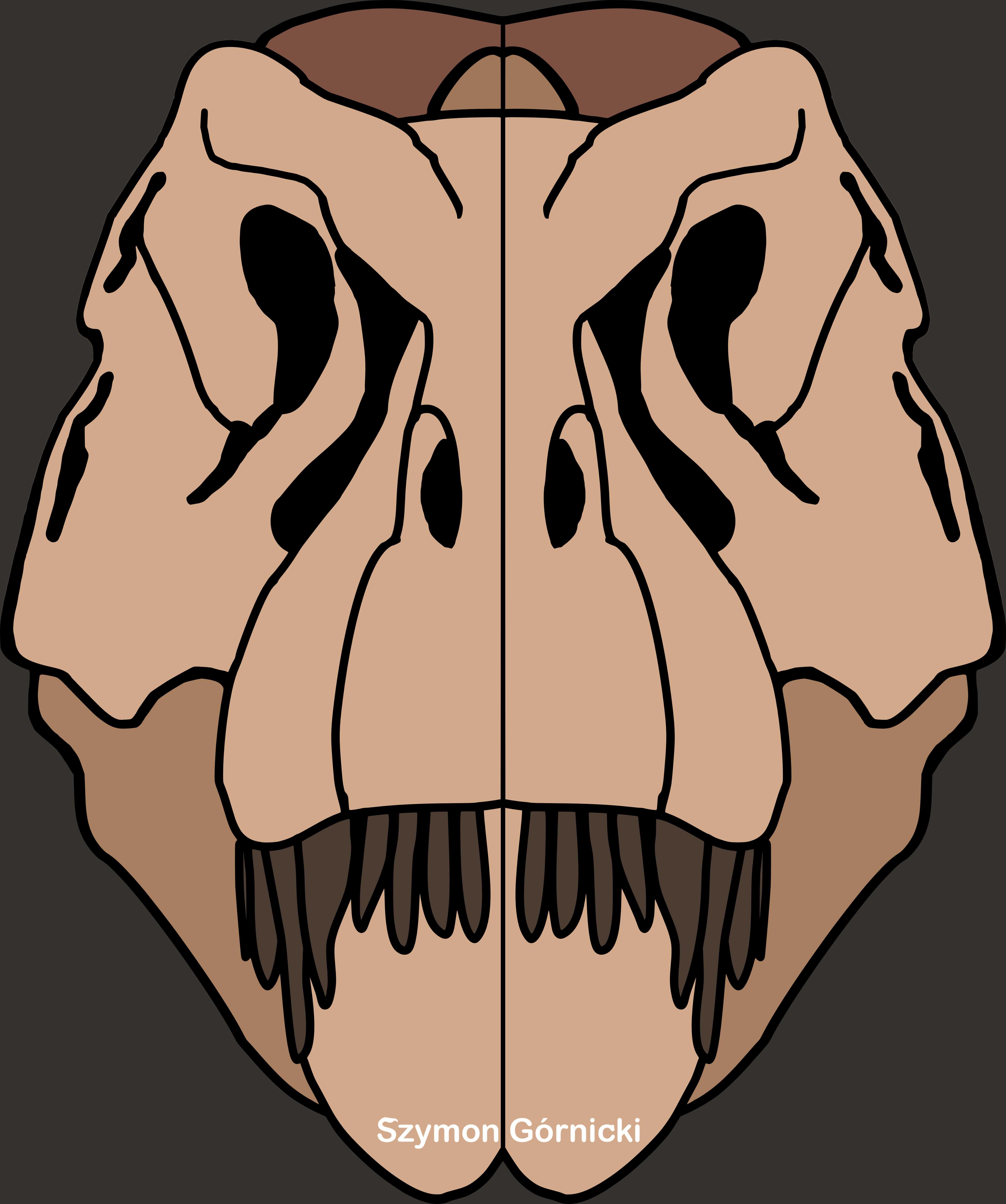 Tyrannosaurus skull design.
